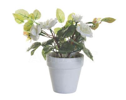 8J-11CK0189 Роза белая в горшочке  20 см (12)